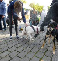 Tierschutzfest am Heumarkt