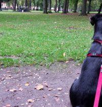 Neue Freunde im neu entdeckten Park