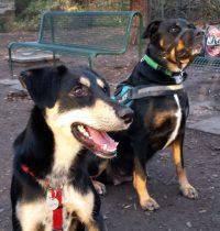 Carlos und Bella