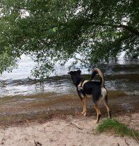 Hoher Wasserstand am Rhein