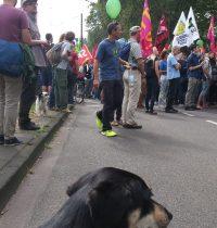 Carlos gegen CETA & TTIP