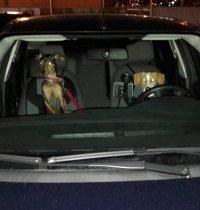 Warten im Auto