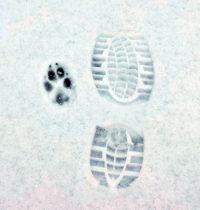 Carlos erster Schneetag