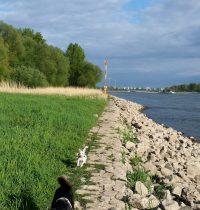 Flittarder Rheinaue