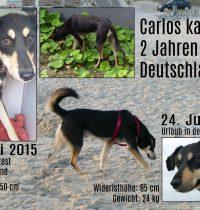 2 Jahre in Deutschland