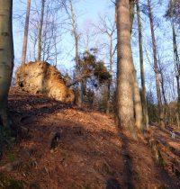 Von Bensberg über den Kadettenweiher zum Naturfreundehaus Hardt