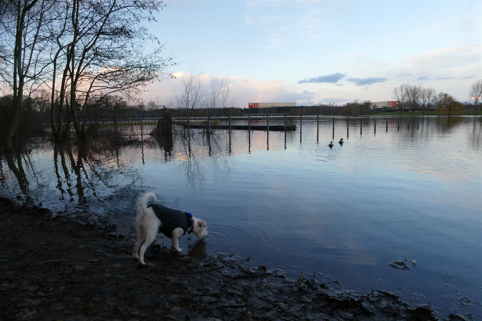 Fühlinger See Hunde