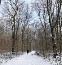 Schnee im Gremberger Wäldchen