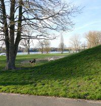 Ordnungsamt im Rheinpark – 1. Knöllchen
